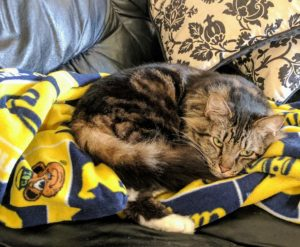 A cat lays on a UC Berkeley blanket